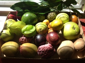 Aberra's Fruit Box