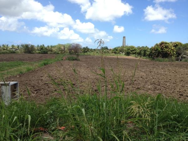 Toni's tilled fields