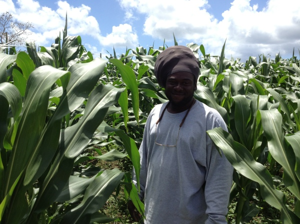 Grantley in his corn field