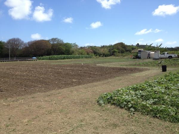 Grantley's fields
