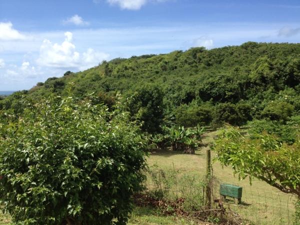 Aberra's Orchard
