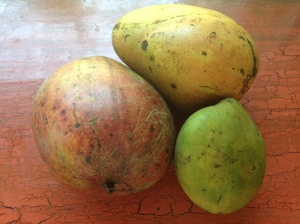 Mangoes in my kitchen